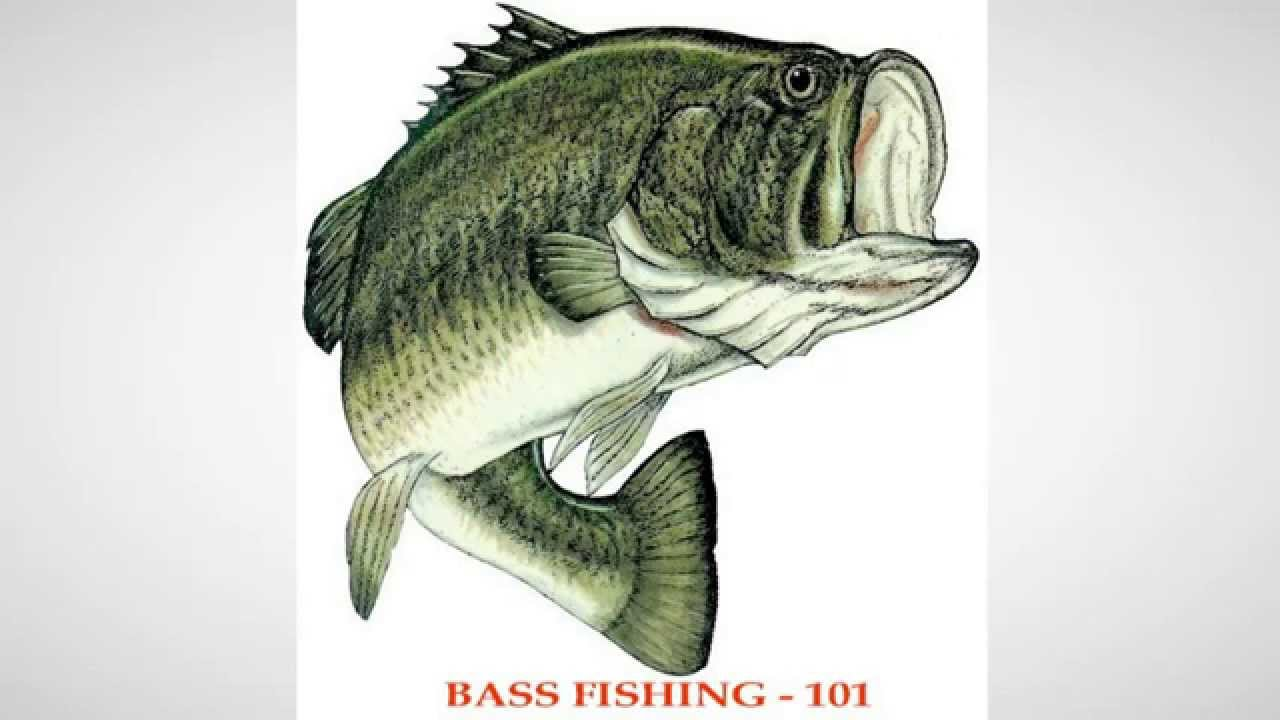 Bass Fishing 101 Tips Techniques Big SmallMouth