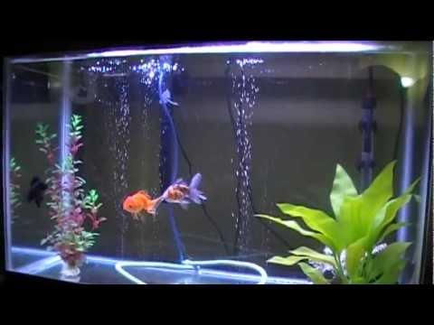 30 gallon goldfish aquarium aquariums 30 gallon 2017 for How to maintain fish tank