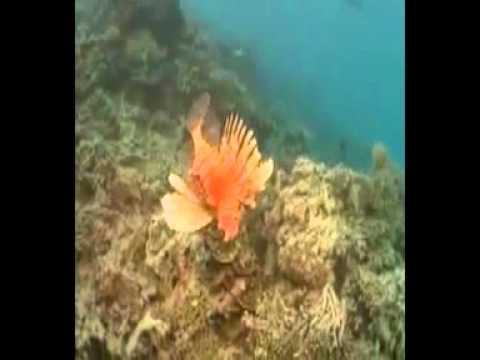hệ sinh thái về biển