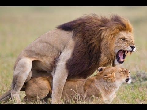 information about animals wild animals national geographic animal