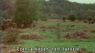 Monty Python FC 24. -