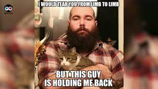50+ Funniest Cat Memes Ever