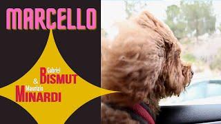 'MARCELLO' (Official Video) by Maurizio Minardi