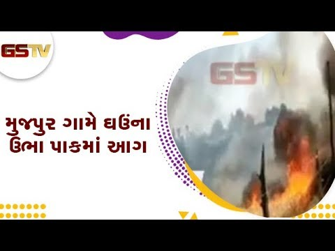 Dholka : મુજપુર ગામે ઘઉંના ઉભા પાકમાં આગ   Gstv Gujarati News