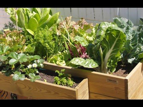 Huerto Urbano Ecológico En Casa Tutorial Huerto Urban Garden Youtube
