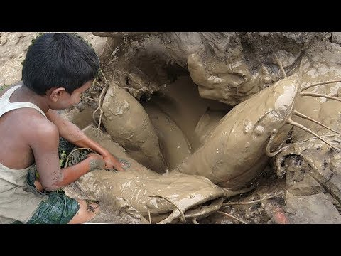 Big Catfish Hunting By Deep Hole ll Amazing Fishing in the Natural Beautiful Field