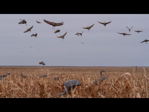 Sandhill Crane Hunting With Premier Sandhills