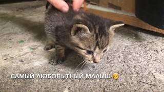 Ep. 2 КОШКА ПРИВЕЛА КОТЯТ В ОПАСНОМ МЕСТЕ | CUTE STREET KITTENS | CAT VIDEO