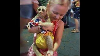 Злая собака,кошка с большими глазами,лемур кушает саранчу.Николь Валова показывает чудных животных