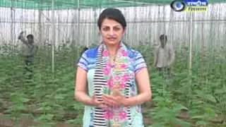 Success Story ( Vegetable cultivation in Poly House) 17 5