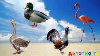 Угадай птиц. Задание для детей. Птицы для детей. Животные для детей видео.