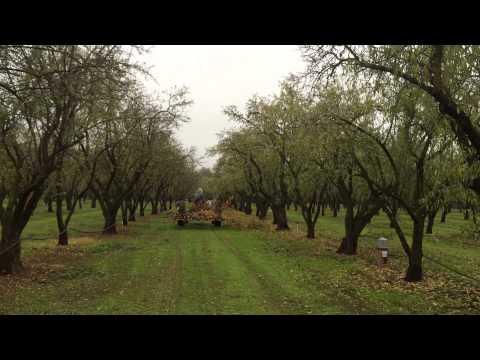 John Drzal: Chico Organic Almond Farmer