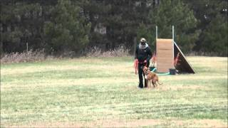 Rocky (boxer) Obedience Level I. Dog Training