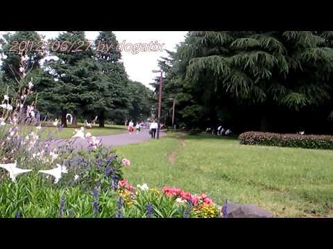 Japan Trip  2012 Tokyo Shibuya Yoyogi Park