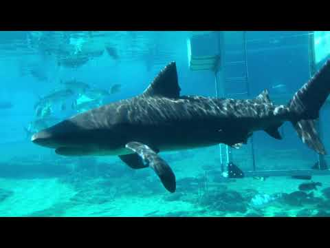 Lost Chambers Aquarium inside Atlantis Hotel Palm Island Dubai