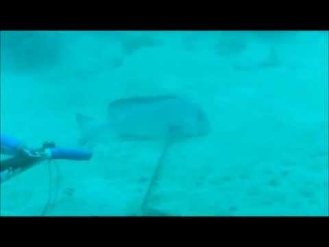 scuba inland sea qatar