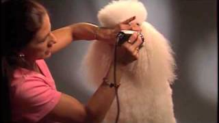 How To - Trim Your Poodle