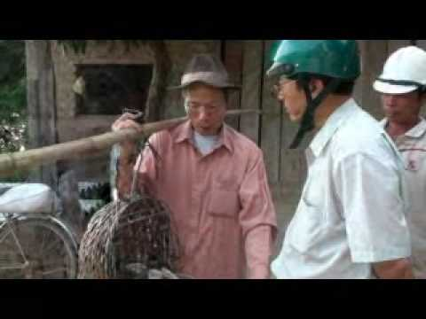 Film 2009 09 26 choi cu