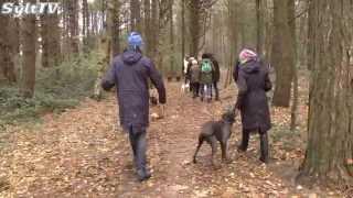 Hundstage in Wenningstedt auf Sylt
