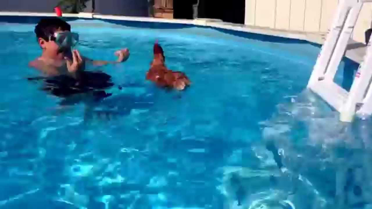 My bad chicken swimming in the pool youtube for Chicken in swimming pool