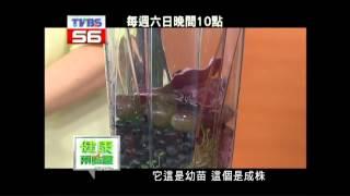 陳月卿示範:保肝精力湯 thumbnail