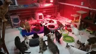 Giochi alla Cat Base