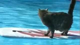 חתולונובלה - ששון מפחד מהמים
