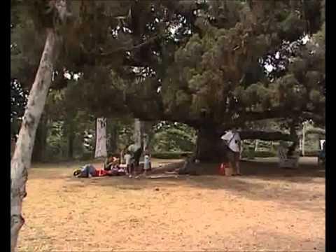 Aburi Botanic Gardens, Aburi - Ghana - West Africa