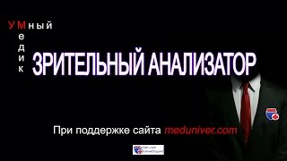 Зрительный анализатор - анатомия, физиология - meduniver.com
