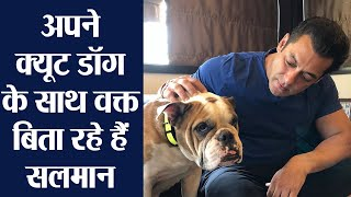 Salman Khan shares adorable pic with his dog | FilmiBeat