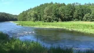 Река Вилия. Природа. Шум воды. Волшебный лес. Звуки леса. Звуки природы.