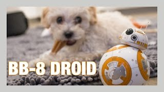 Sphero BB-8 Droid unboxing + Puppy review