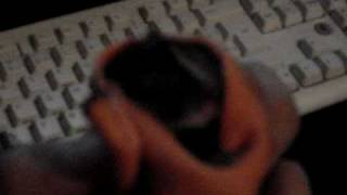 spike, lil kitten