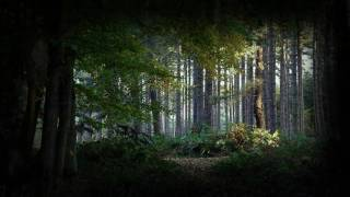 Repeat youtube video Relaxation Visualization - Mountain Forest - helps you de-stress and relax.