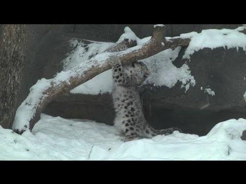 Zoo Animals Look Cute in Winter Snow