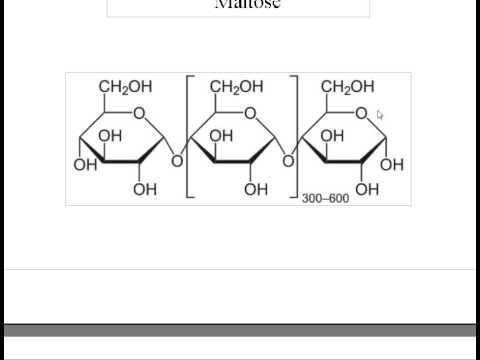 Ap Bio Carbohydrates