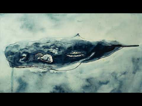 Cosmo Sheldrake - Playing Places: Oceans