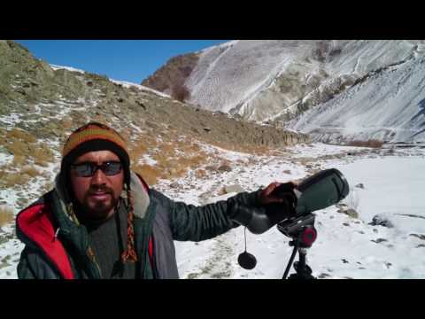 Tracking snow leopards in Hemis High Altitude National Park, Ladakh, India.