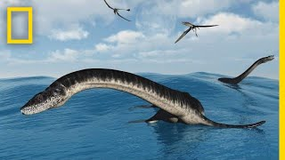 Plesiosaurs 101 | National Geographic
