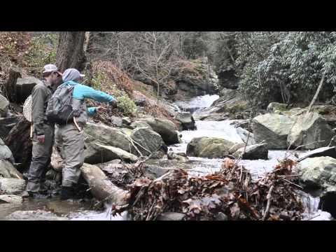 Boone Bounty - Big Trout In Small Creeks