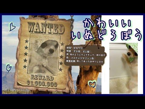 ☆Wanted!☆かわいい犬泥棒☆おもしろいチワワ~Cute dog thief☆ Funny chihuahua style