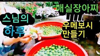 초간단 우메보시 매실장아찌 만들기 보덕사010 4813…