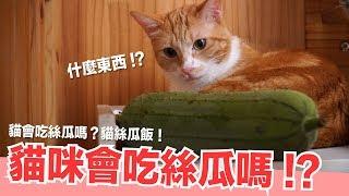 貓會吃絲瓜?做貓的絲瓜飯試試看!【貓副食食譜】貓鮮食廚房EP171