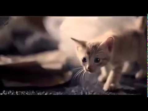 Kasian anak kucing menangis saat parasit di tarik dari