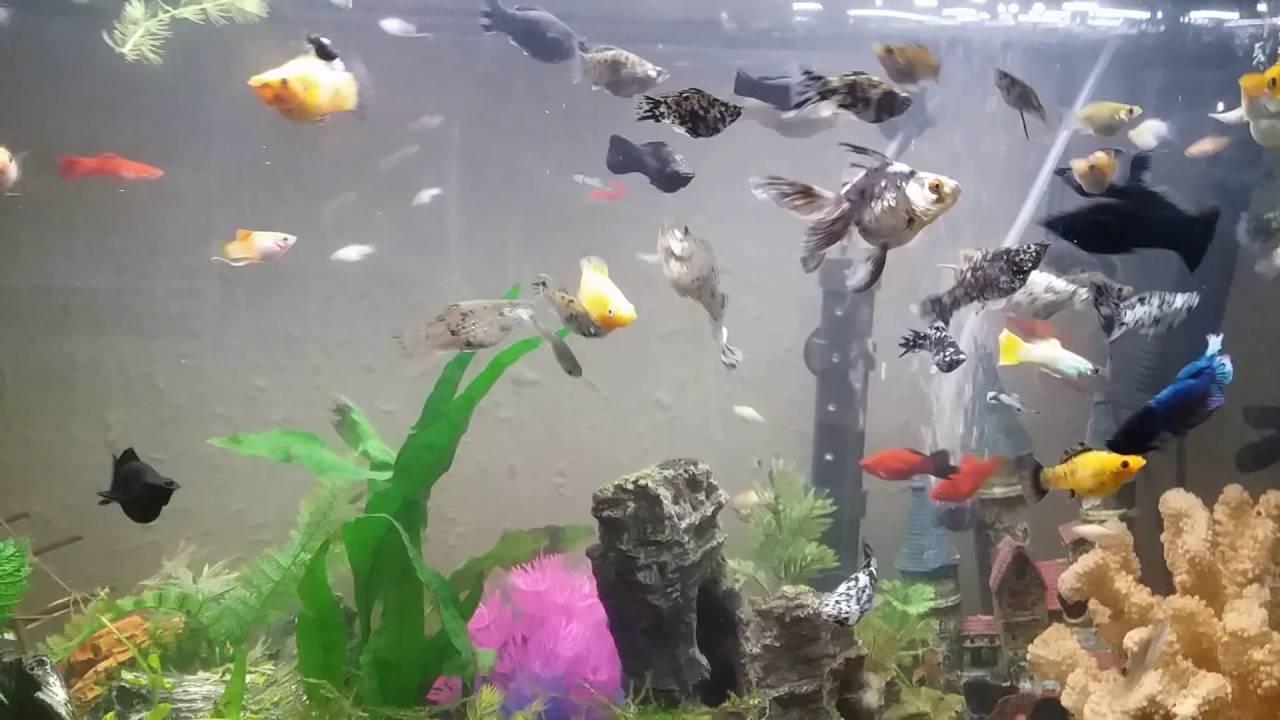 Acuario comunitario peces de agua fr a y dulce youtube Peces de agua dulce fria