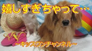 KiSSWann(キッスワン) 詳しくは⇒⇒⇒http://kisswann.com 『シーズー犬の...