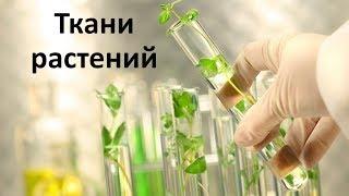 2. Органы и ткани растений (6 класс) - биология, подготовка к ЕГЭ и ОГЭ 2019