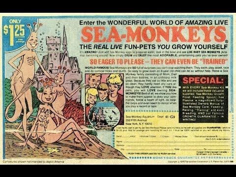 Will Acidic Sea Monkeys Kill the World's Oceans?!