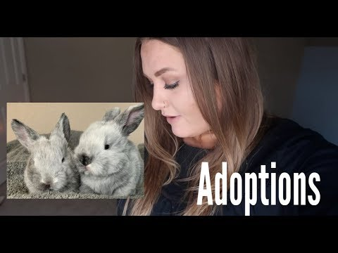 Letting Subscribers Adopt The Baby Bunnies