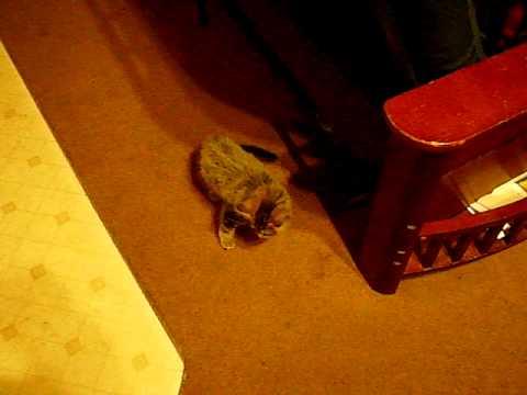 My roommies new kitten